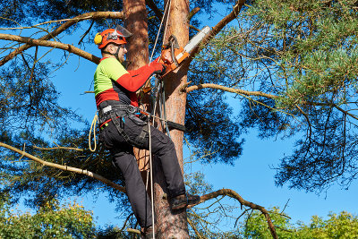 Tree Care & Removal